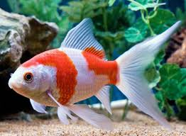 Pondok Air, Sentra Ikan Hias dan Lobster --- Katalog Ik